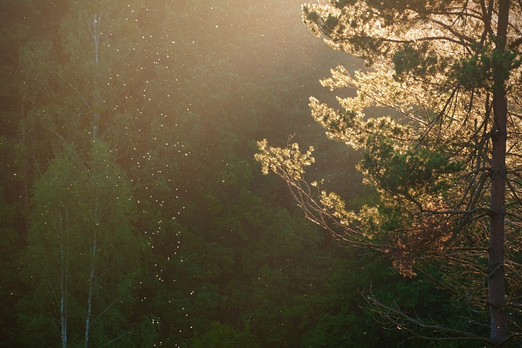 Światło I
